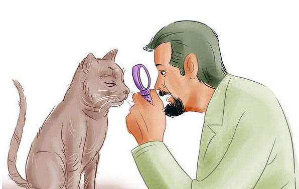как ухаживать за слепой кошкой дома