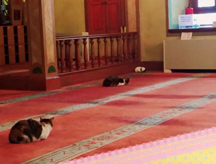 В мечети кошки чувствуют себя как дома.
