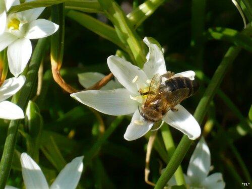 Из жизни пчел...