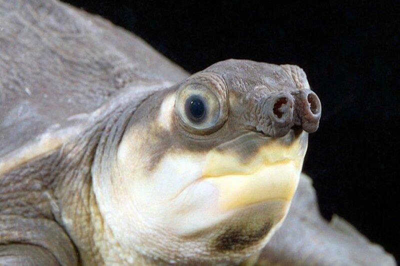 Гербарий уродов: конкурс самых страшных животных планеты