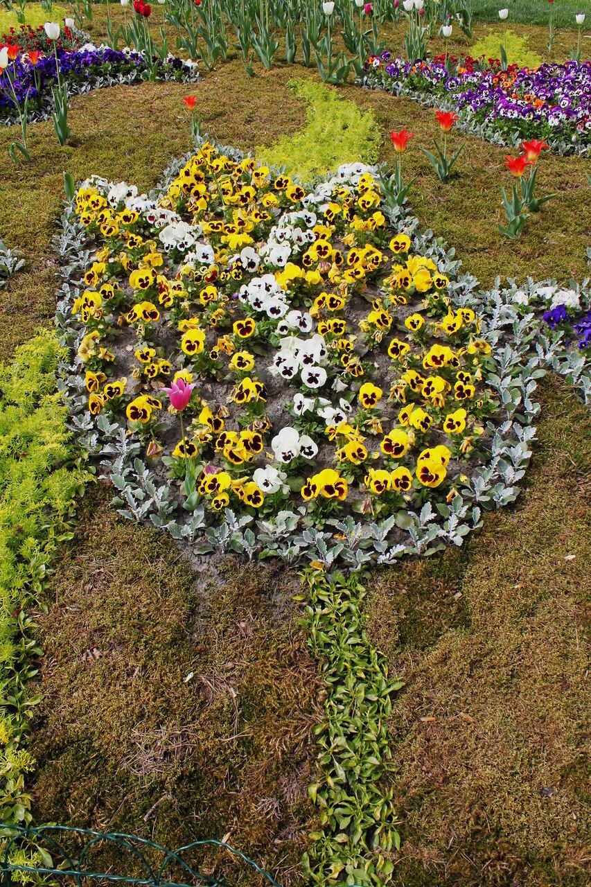Анютины глазки на выставке весенних цветов