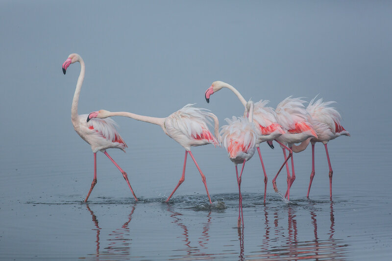 Пюре фламинго, орикс в сливках и другие сказки из Намибии