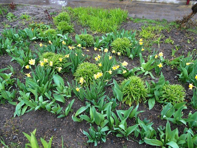 Свежие цветы и листья ... DSCN4590.JPG
