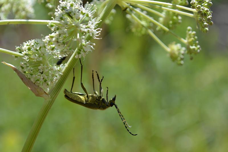 сонный жук.jpg