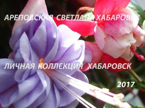 НОВИНКИ ФУКСИЙ. - Страница 5 0_19bbe9_9086f21b_L
