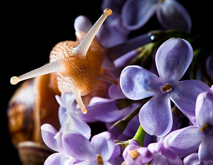 Explorer of Lilac by Suren Manvelyan