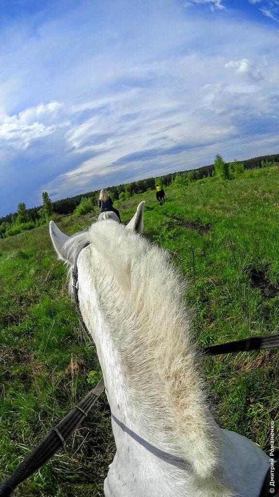 прогулка на лошади в Белгороде, конная прогулка в Белгороде, конно спортивный клуб в Белгороде, конно спортивный клуб Белогорье