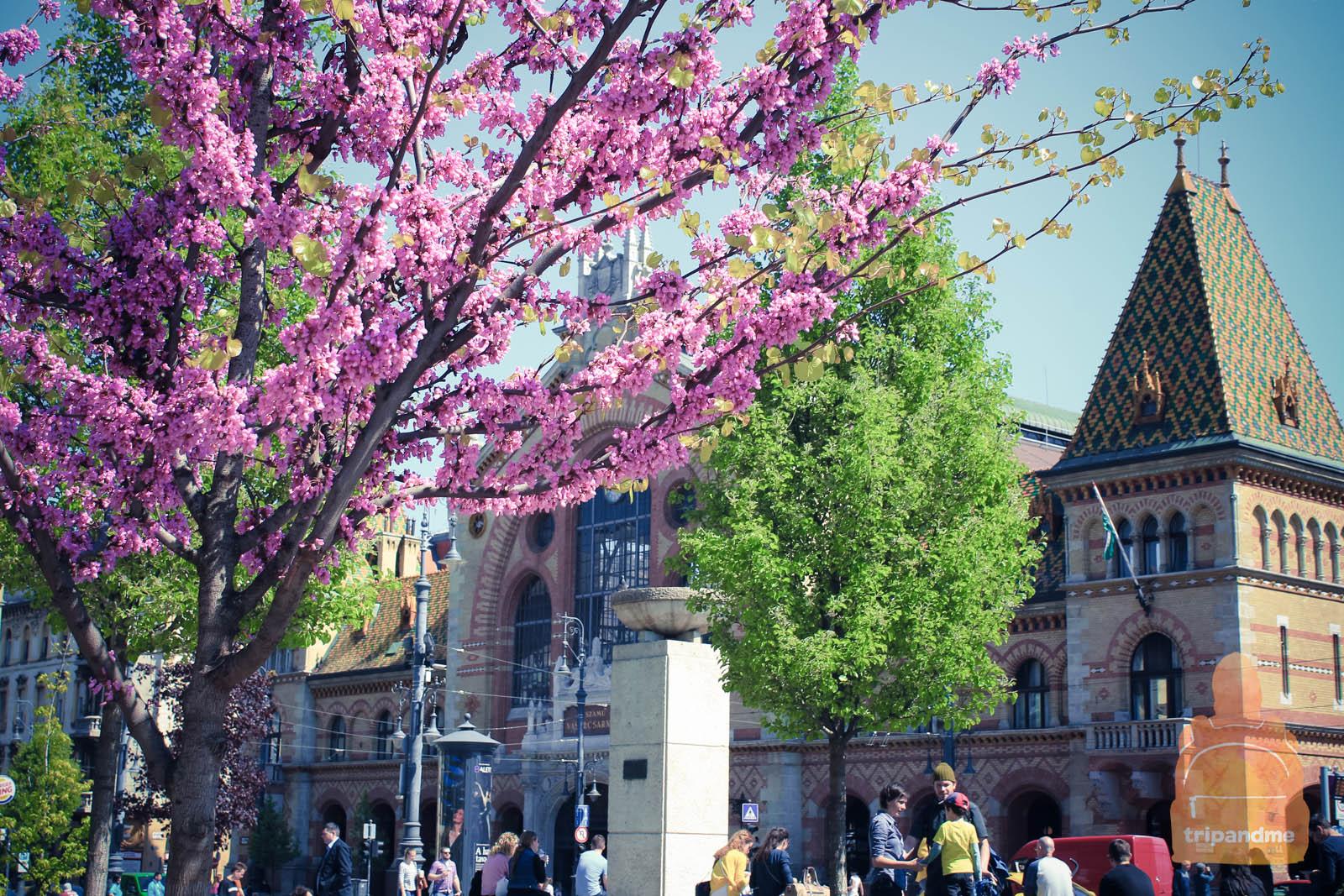 В апреле цветут деревья