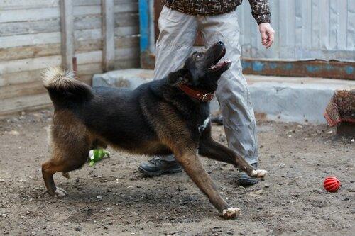 Брауни собака из приюта догпорт