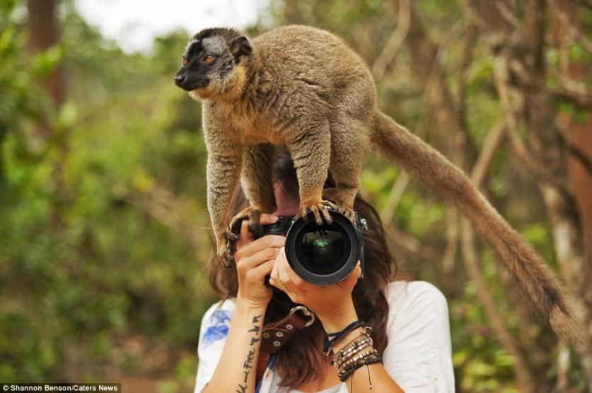 Больше всего неудобств фотографу доставляют животные, которые считают своим долгом взгромоздиться на