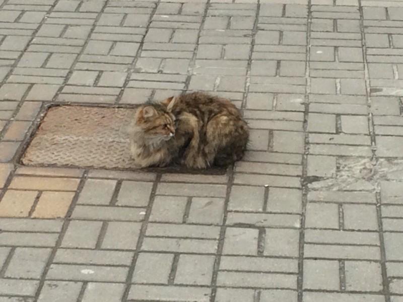 Может быть, кто-то даже пытался забрать его себе домой, но кота не так-то легко сдвинуть с того мест