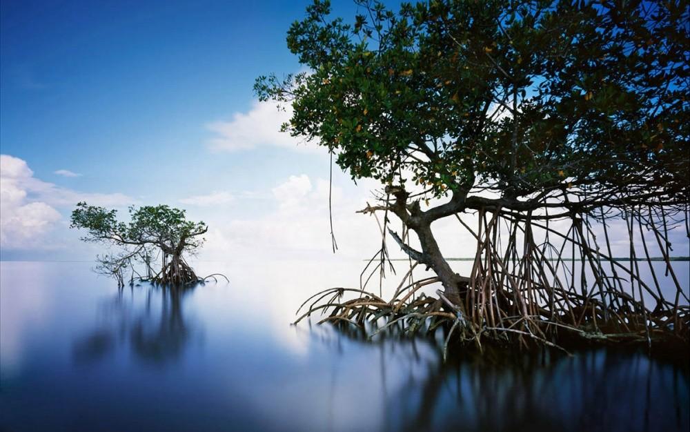 Национальный парк «Эверглейдс», Флорида, США Водоемы этого красивейшего парка США, на территории кот