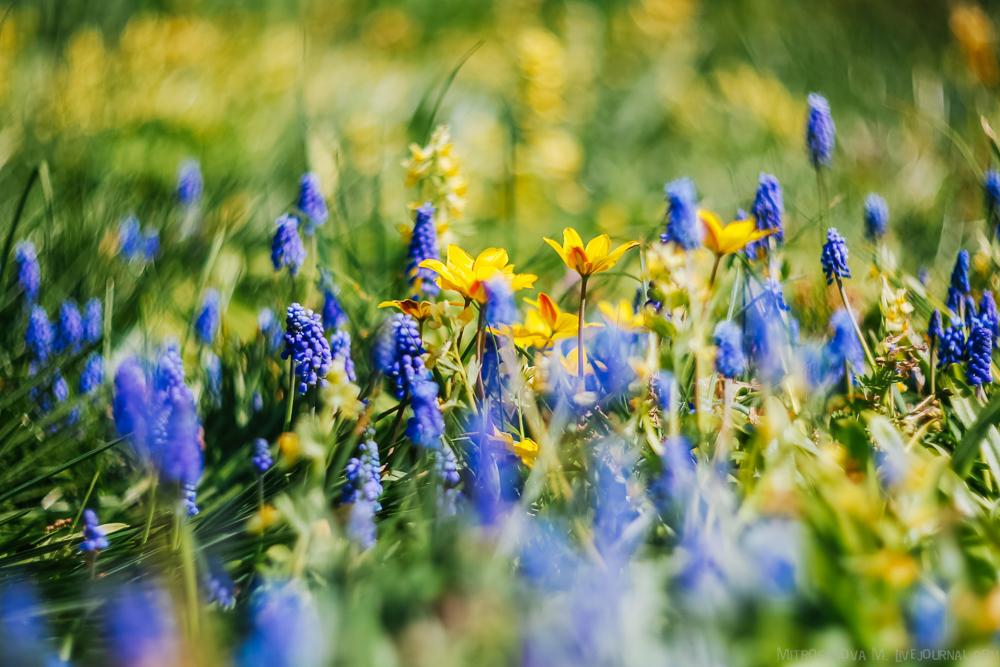 Цветение в Ботаническом саду