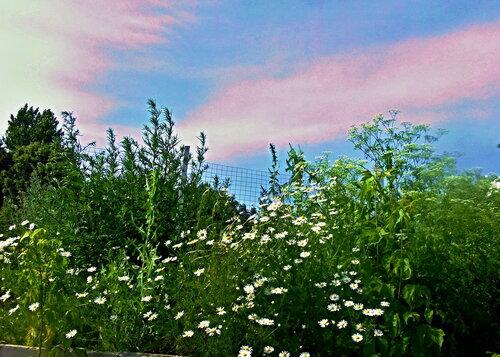 И розовые плыли облака...