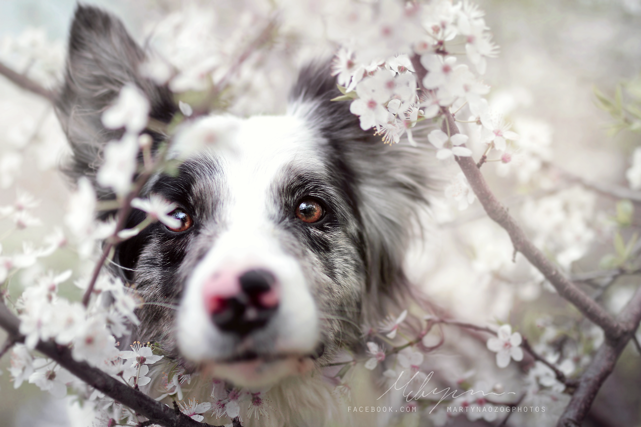 Счастливые собаки / фото Martyna Ożóg