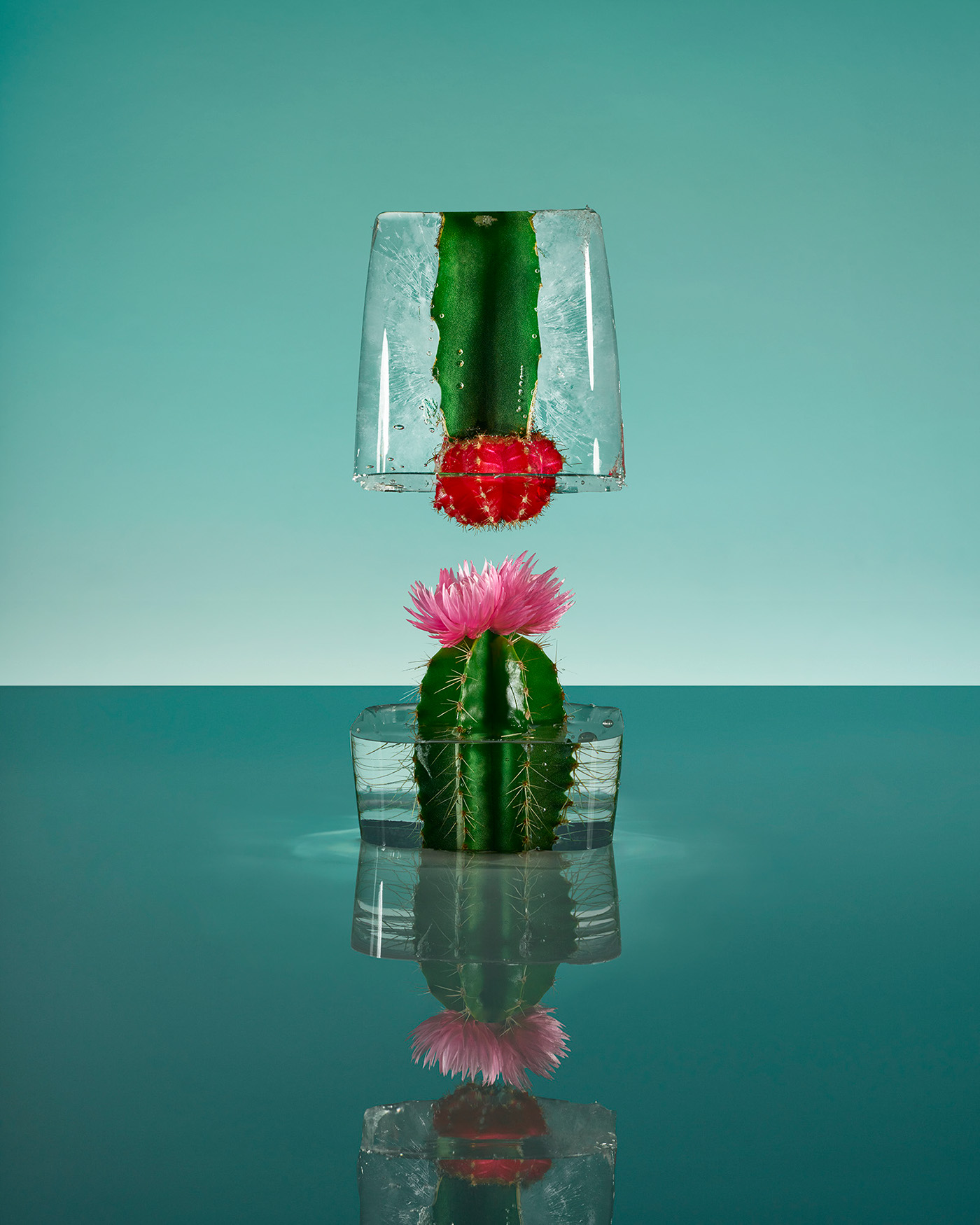 Замороженные цветы / фото Paloma Rincón