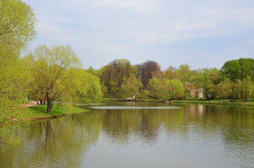 Нежная зелень весны