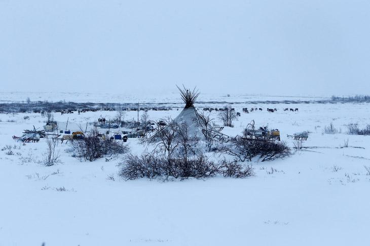 2. Стадо оленей в загоне в поселке Красное Ненецкого автономного округа. В 1990 году в регионе было
