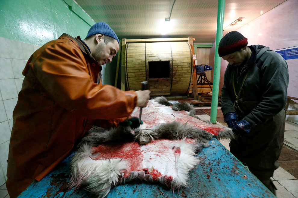 10. Оленина. (Фото Sergei Karpukhin | Reuters):