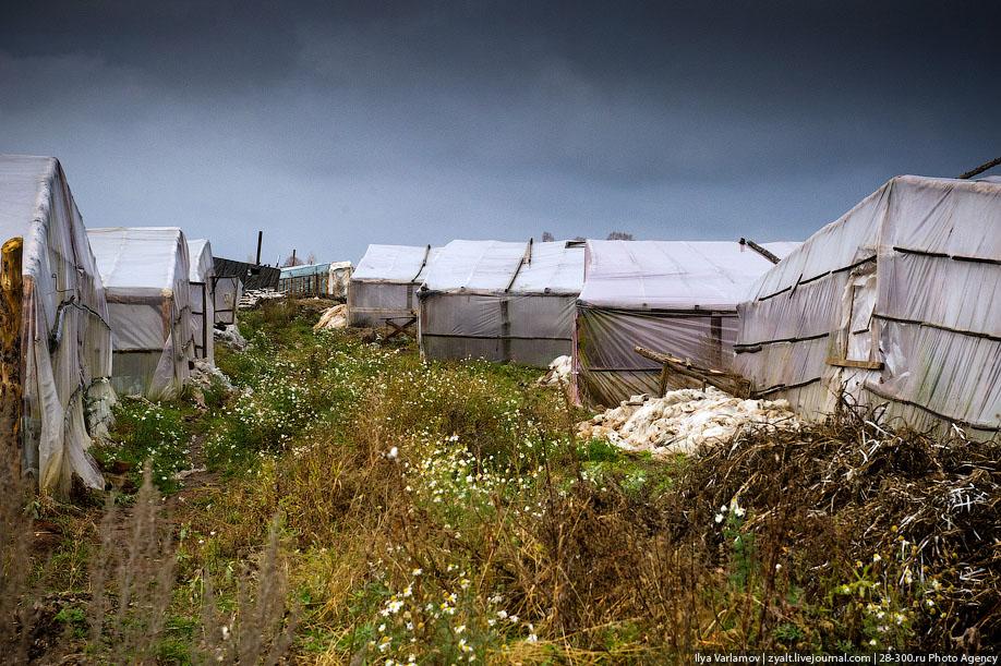 24. Сейчас овощи убрали и земля отдыхает. Но уже в декабря тысячи китаqцев вновь приедут сюда, чтобы
