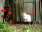 Одинокая кошечка желает познакомиться