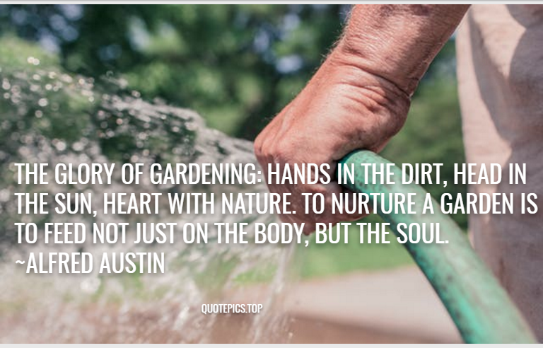 The glory of gardening: hands in the dirt, head in the sun, heart with nature. To nurture a garden is to feed not just on the body, but the soul. ~Alfred Austin