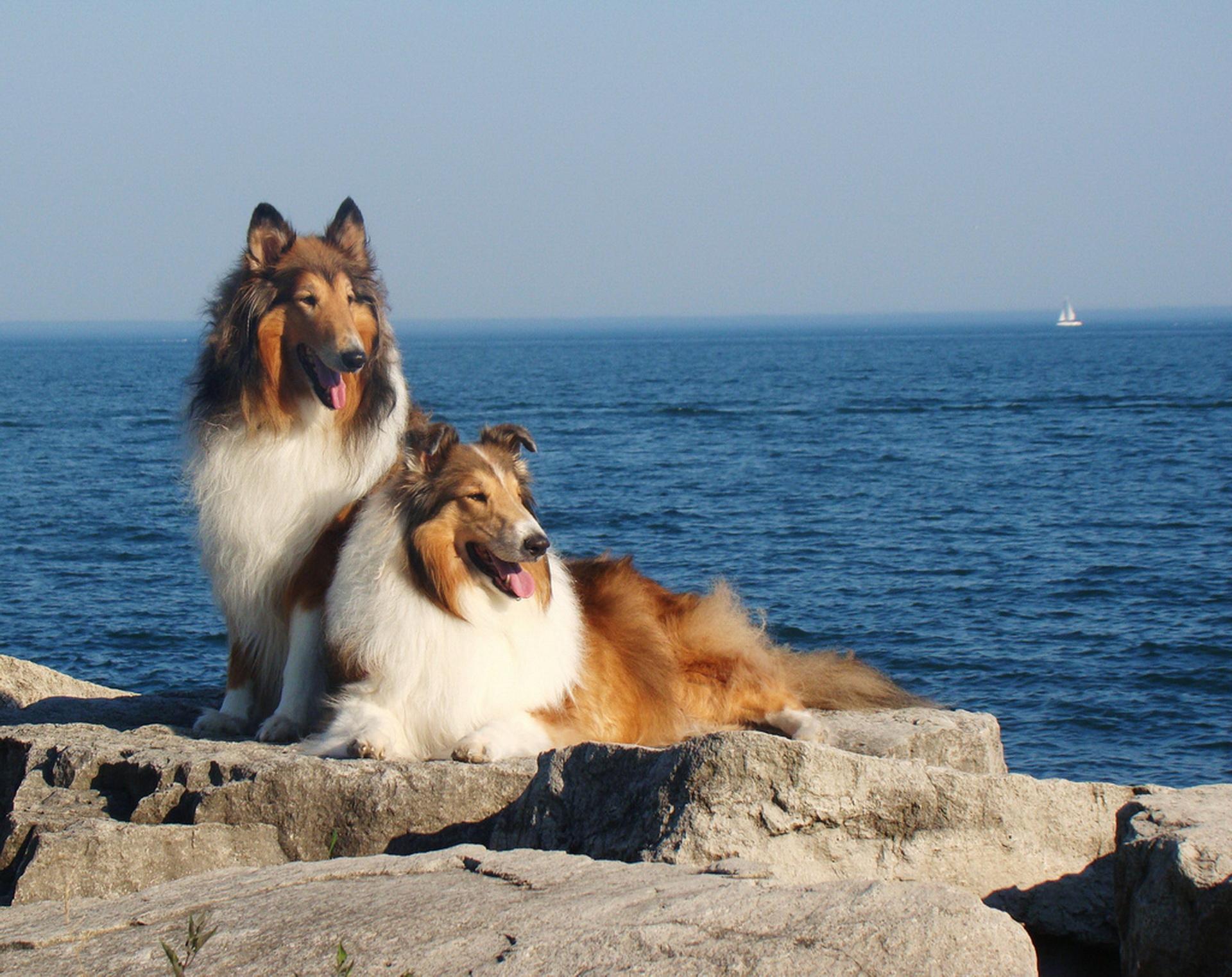 Парочка біля моря