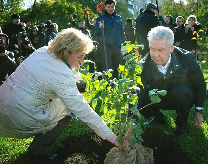 Дополнительное озеленение в Москве, высадка деревье. Сергей Собянин