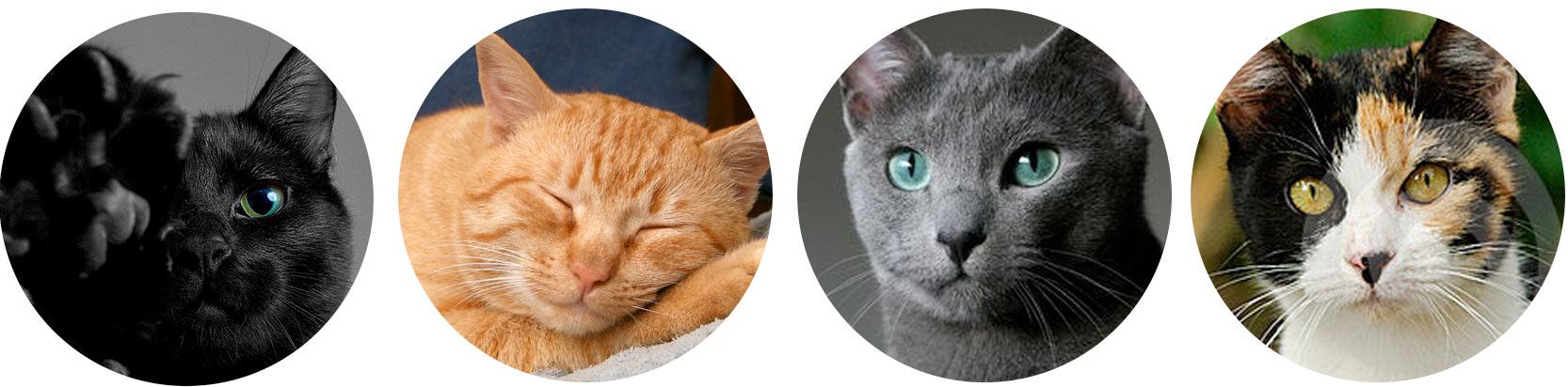 окрас у кошки