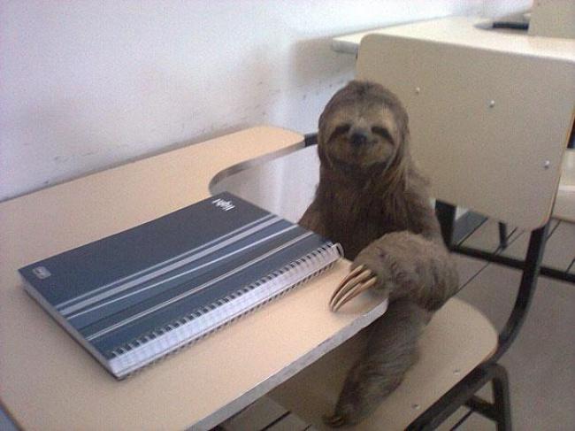Любой студент между сессиями выглядит так. Особенно вглазах преподавателя.