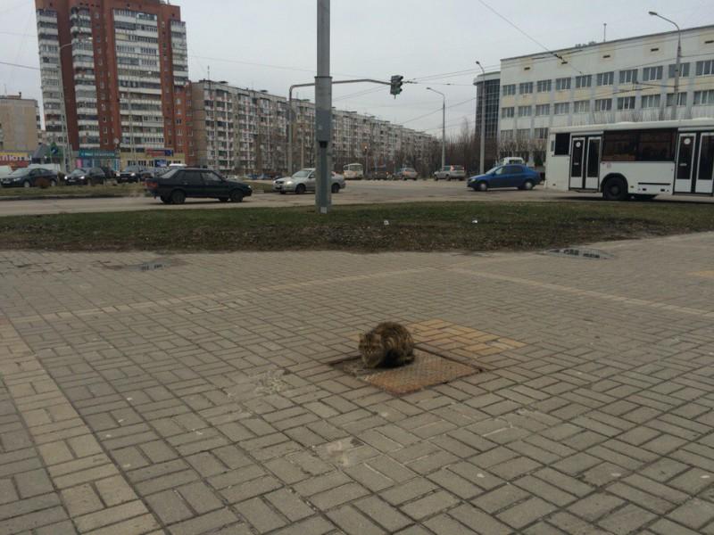 В Белгороде появился кот «Хатико», который ждет своего хозяина целый год (5 фото)