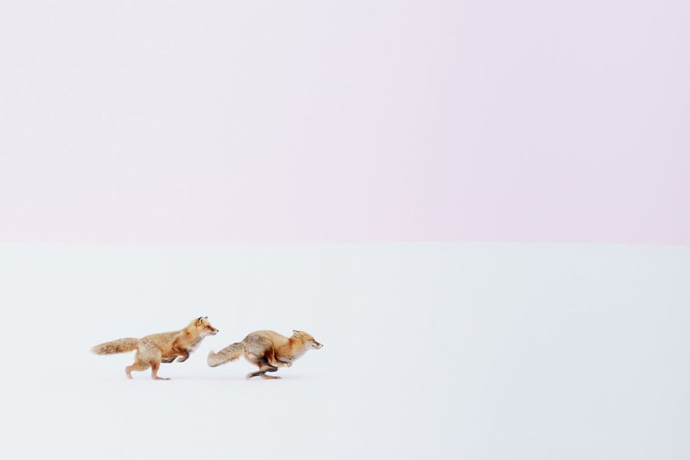 Хироки Иноуэ, «Куда ты, туда и я» (Wherever you go, I will follow you!!) — победитель в категории «П