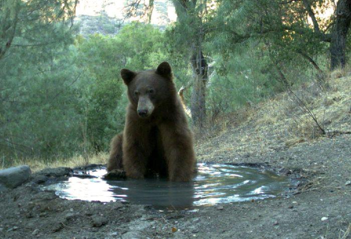 Медведь падонаг