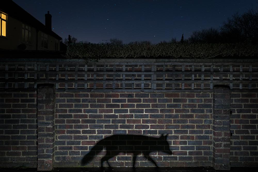 Shadow walker , Richard Peters, UK. Urban, WINNER.