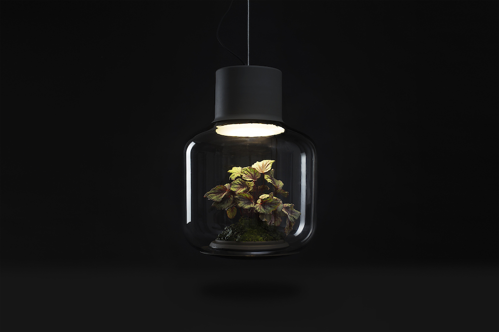 Terrarium Lamps by Nui Studio Light Your Space with Suspended Ecosystems