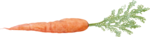 CreatewingsDesigns_LG_Carrot1.png