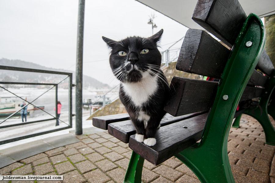 супер черный кот на пристани