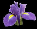 natali_design_easter_flower14.png