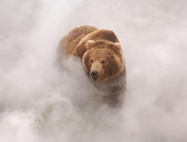 Фотографии животных отлучших фотографов анималистов России 0 145e5c e876a25 orig