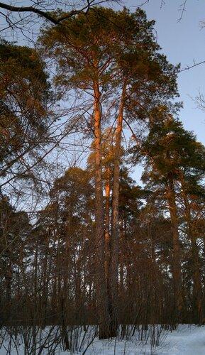 8. Смешанный лес