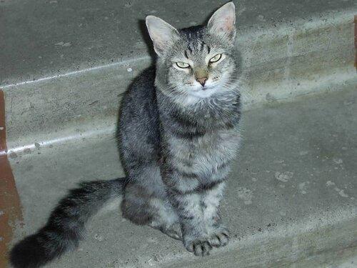 NeoN Грим — «старый кот» на Яндекс.Фотках