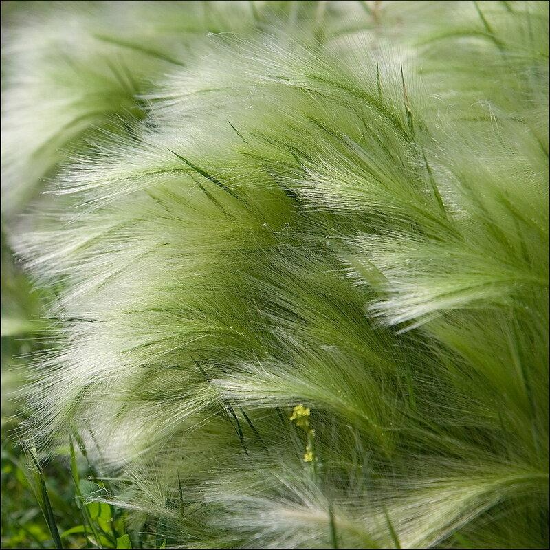 Ковыль-трава