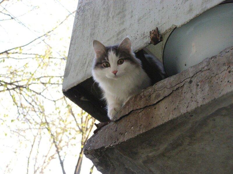 Кошка на балконе_3.jpg