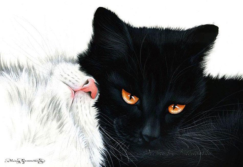 кошки-кошки-яя-3.jpg