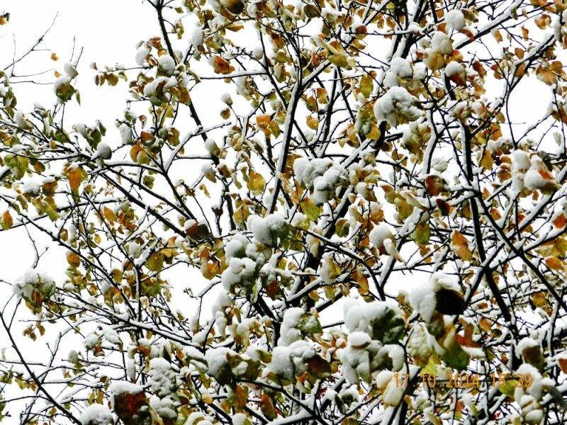 Зима сменила осень (много фото)