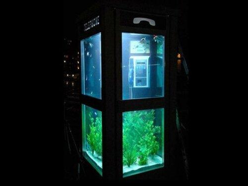 akvarium9.jpg
