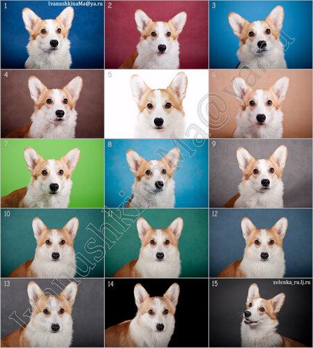 пофотографирую Ваших собак! - Страница 3 0_163fe6_40df952e_L