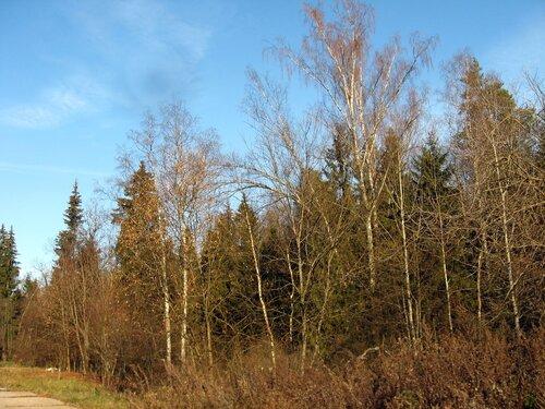 Прозрачный лес