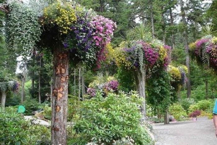 «Ледниковый» ботанический сад Glacier Gardens на Аляске
