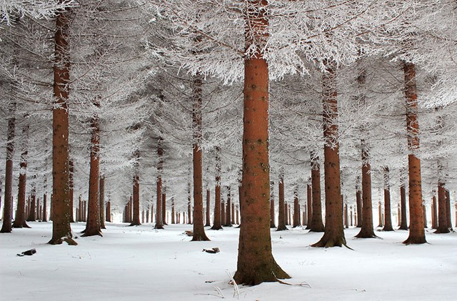 100 самых красивых зимних фотографии: пейзажи, звери и вообще 0 10f5b7 f964d63e orig